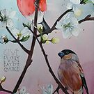 Bullfinch's in the Blossom. by samcannonart