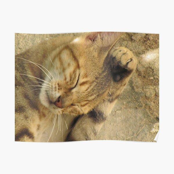 Somali cat, Somalia Poster