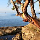 Early Evening Cotton Park Mayne Island BC  by TerrillWelch