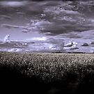 A Storm is Brewing by Emjay01