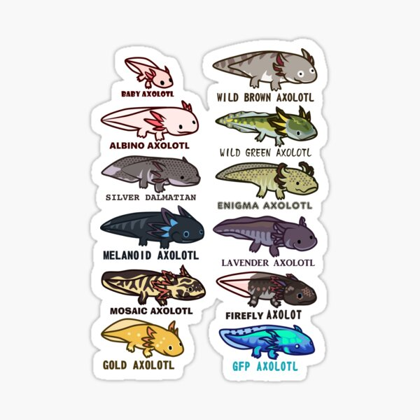 axolotl morphs and colors Sticker