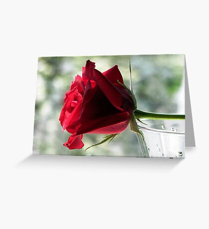 A Rainy Day Rose Greeting Card