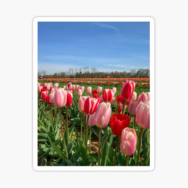 Red & Pink Tulip Field Sticker