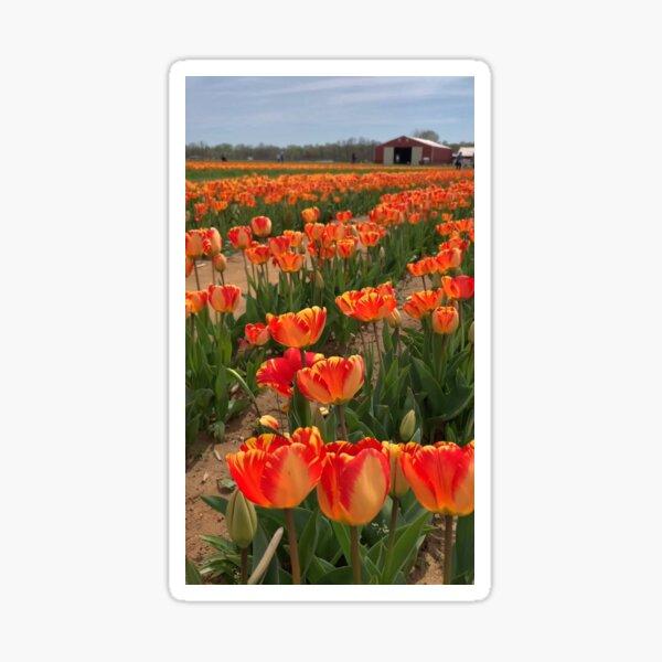Orange Tulip Field Sticker