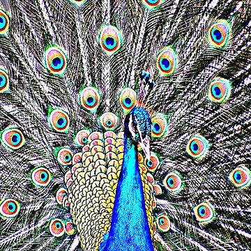 Peacock vibrant by chloemease
