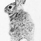 Rabbit by AnnaShell