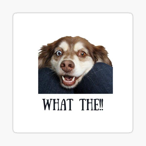 Shocked Dog Sticker