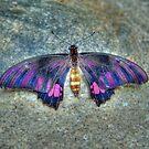 Steely Buttterfly by mrthink