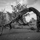 Monument Valley Tree by Graham Gilmore