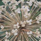 Seeds of Love - JUSTART © by JUSTART