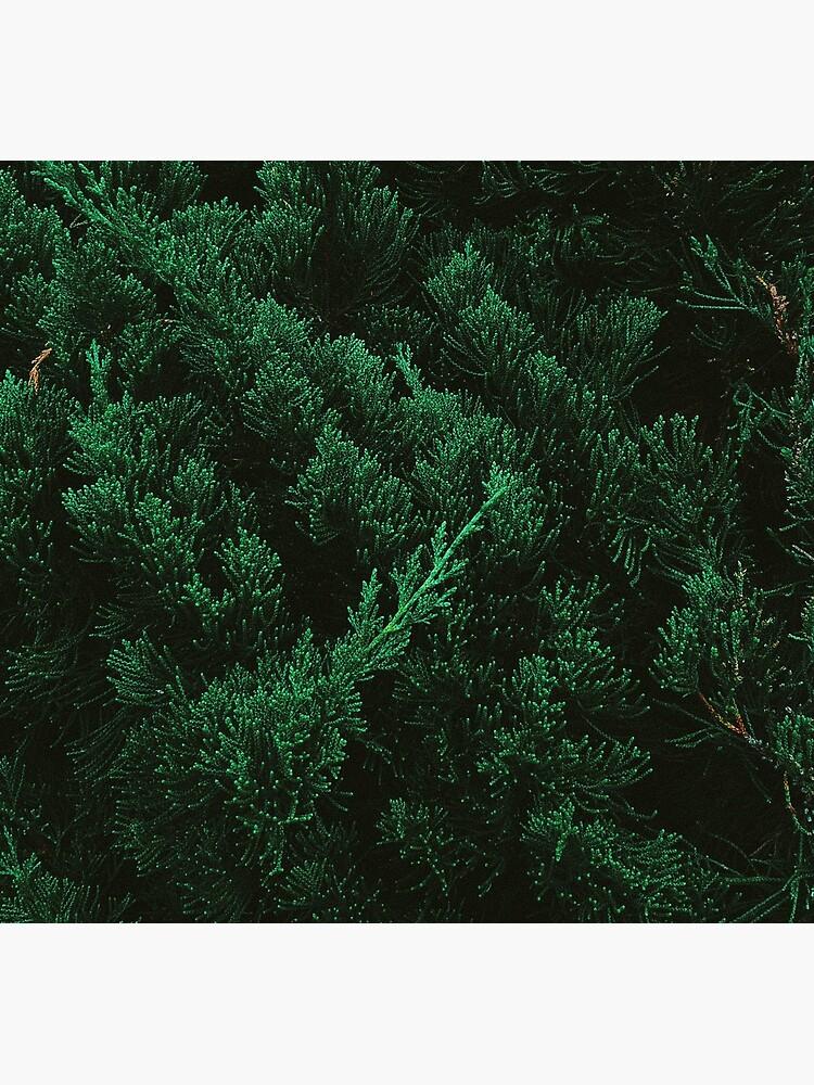 Pine trees by TnT-Merch