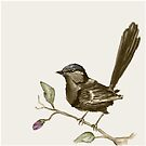Splendid fairy-wren sepia  by Marie Magnusson