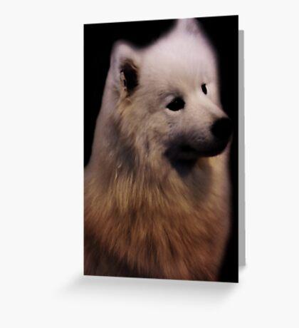 Samoyed Portrait Greeting Card