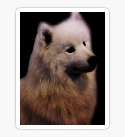 Samoyed Portrait Sticker