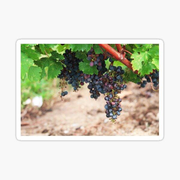 Niagara Vines Sticker