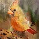 Pretty Female Cardinal by Barbara Manis