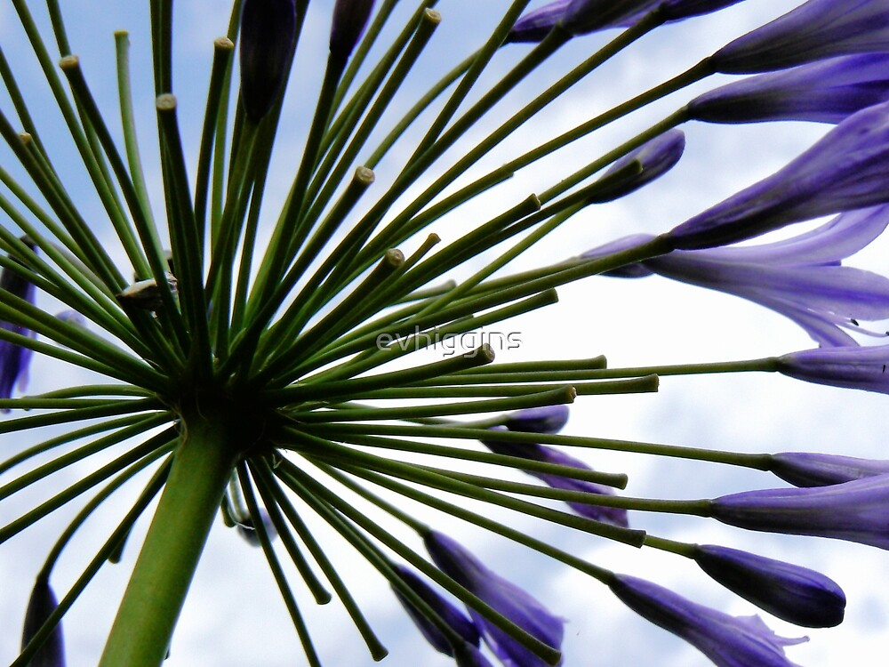 Mystery Flower by evhiggins