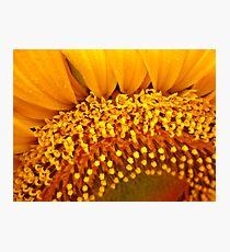 Floral Florets Photographic Print