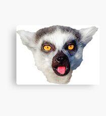 lemur, monkey, monkey Canvas Print