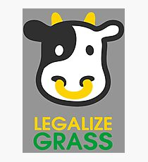 cow legalize the grass Photographic Print