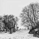Blanket of snow by Vicki Field