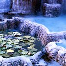 Hot Springs and Lilies by Wayne King