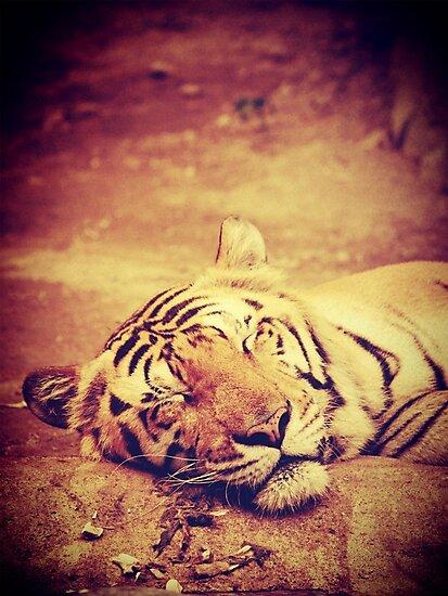 Vintage Tiger by Sven19864