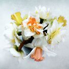Spring Daffodils Still Life by LouiseK