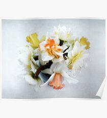 Spring Daffodils Still Life Poster