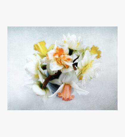 Spring Daffodils Still Life Photographic Print