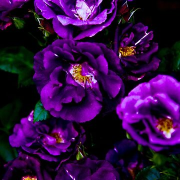 Purple Flowers by isabelramsey
