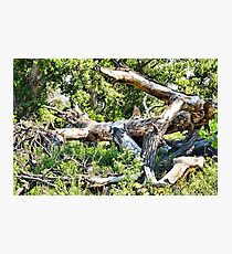 Deadwood on Cherry Creek Trail 1  Photographic Print