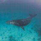 Whale swimming - print by Kara Murphy