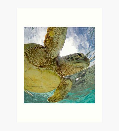 Hopeful turtle - print Art Print