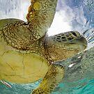 Hopeful turtle - print by Kara Murphy