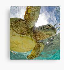 Hopeful turtle - print Canvas Print