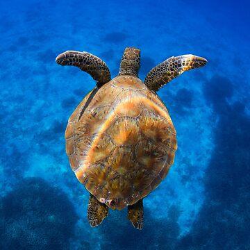 Cruising turtle - print by KaraMurphy