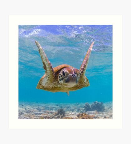 Joyful turtle - print Art Print