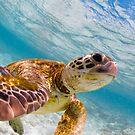 Turtle selfie - print by Kara Murphy