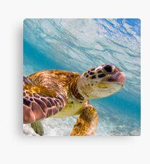 Turtle selfie - print Canvas Print