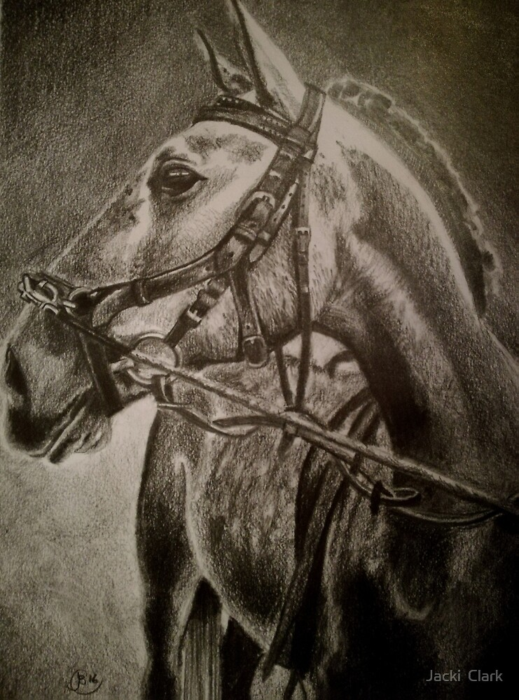 Young Lusitano horse by Jacki  Clark