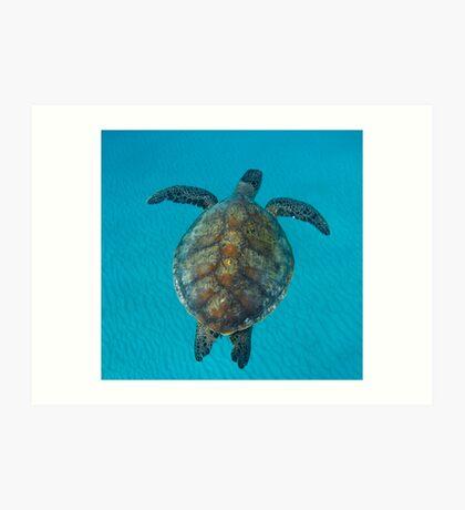 Peace turtle - print Art Print