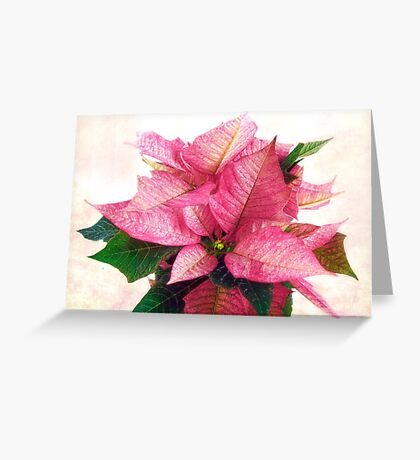 Pink Poinsettia Christmas Card Greeting Card