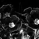 Simply Black and White by Josie Jackson
