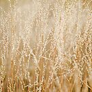 Pilbara Grass by oddoutlet