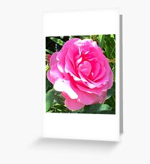 Blush Pink Rose Greeting Card