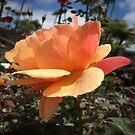 Peachy Rose by MizMeliz