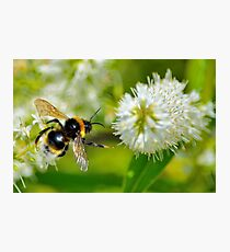 Flight Of The Bee Photographic Print