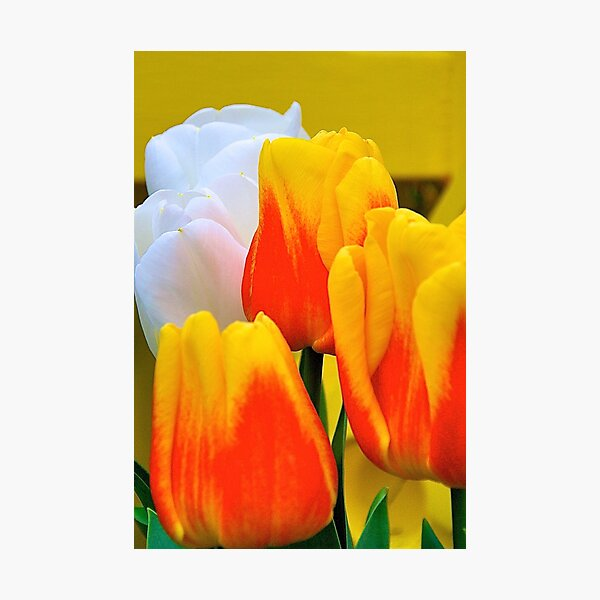 Life is All About Tulips Photographic Print