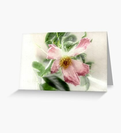 After the Storm - Wild Rose Greeting Card